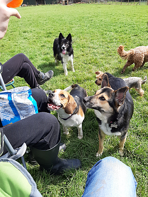 Dog walking groups in Horsham